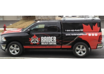 Hamilton animal removal Raider Wildlife Control