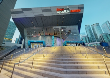 Toronto places to see Ripley's Aquarium of Canada