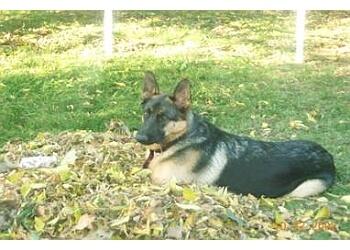 Gatineau dog trainer Savagesams Dog Behavior