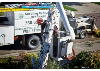 Edmonton tree service SEEDLING TO STUMP