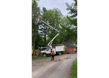 Newmarket tree service Shady Lane Expert Tree Care Inc.