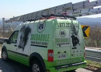 Burlington animal removal Skedaddle Humane Wildlife Control