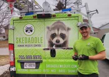 Halifax animal removal Skedaddle Humane Wildlife Control