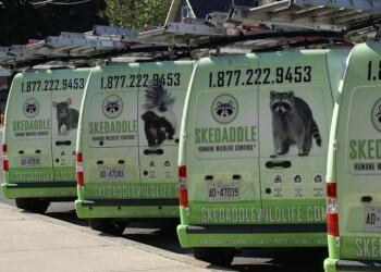 Sudbury animal removal Skedaddle Humane Wildlife Control