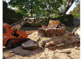 Oshawa tree service Skylark Tree Care