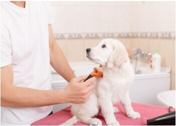Huntsville pet grooming Snipits By Sue