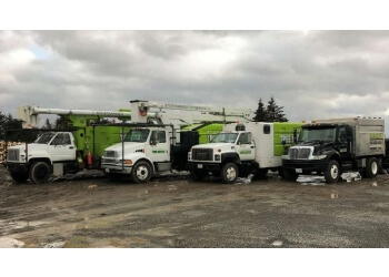 St Catharines Tree Service