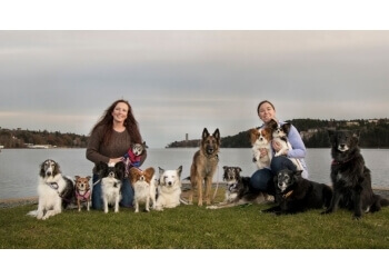 Halifax dog trainer Sublime Canine Services