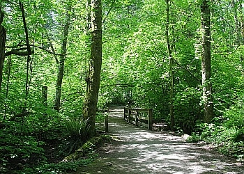 Sunnyside Acres Urban Forest