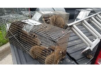 Brampton animal removal TDOT WILDLIFE REMOVAL
