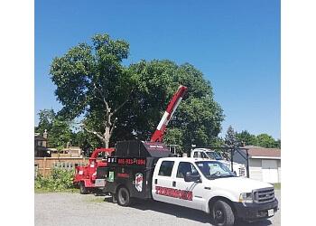 Welland tree service TREEMORE