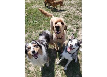 Whitby dog walker Tails & Trails Pet Care
