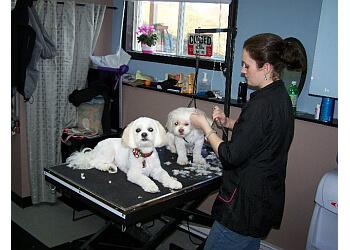 Saint John pet grooming Taja's Professional Grooming