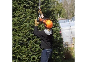 3 Best Tree Services in Surrey, BC - Expert Recommendations