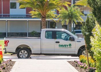 Pickering tree service The Davey Tree Expert Company