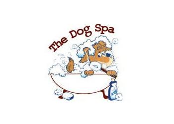 Brantford pet grooming The Dog Spa