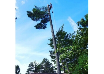Sault Ste Marie tree service TimberSafe tree experts