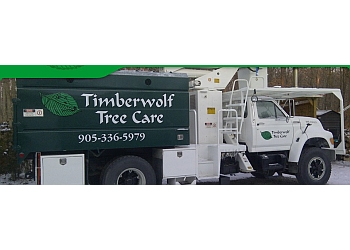 Burlington tree service Timberwolf Treecare and Consulting
