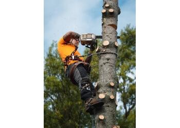 Niagara Falls tree service Tomahawk Tree & Service