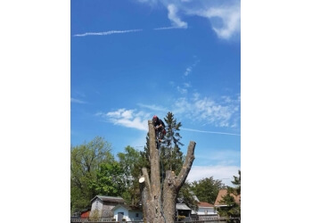 Tree Men & A Chainsaw Inc.