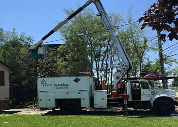 Burlington tree service Tree Works