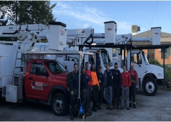 Halifax tree service Tree Works Ltd.