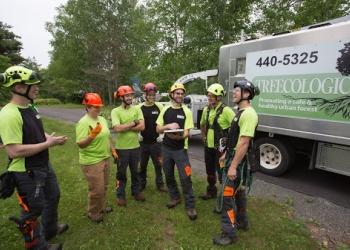Fredericton tree service Treecologic Inc.