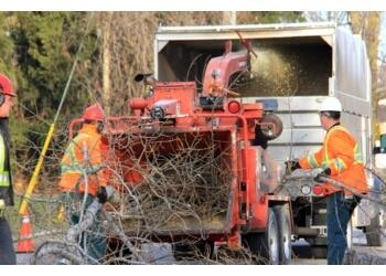 Treescape Certified Arborists