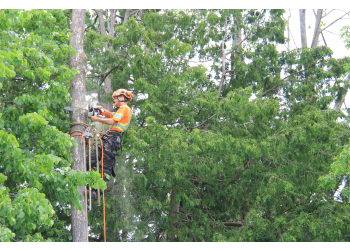 Peterborough tree service Treescape Certified Arborists