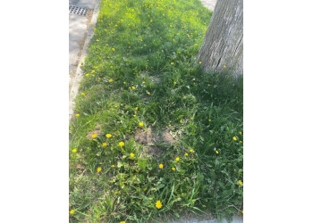 Cambridge lawn care service TruGreen