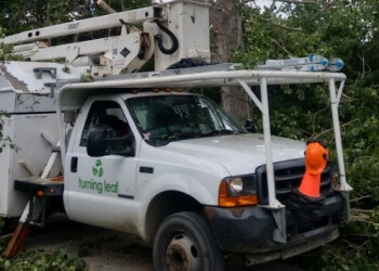 Calgary tree service Turning Leaf Tree Service