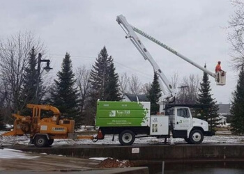 Peterborough tree service Van Till Tree Care & Removal
