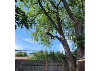 Oakville tree service Wildwood Tree Services Ltd.