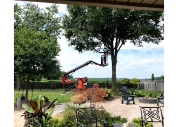 Windsor tree service Wilson Tree Service Inc.