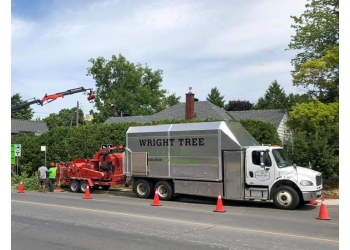 Ottawa tree service Wright Tree Service