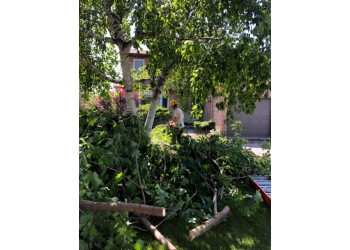 Whitby tree service iTrim4U