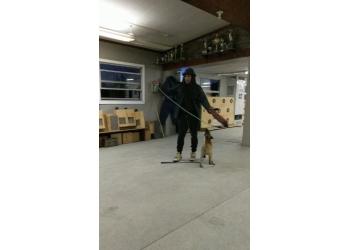 Orangeville dog trainer olympusk9